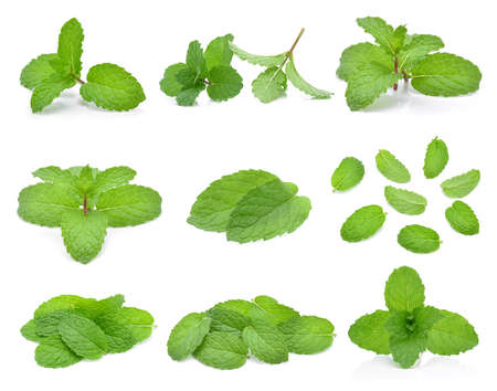 Mint leaves isolated on white background. Stockfoto