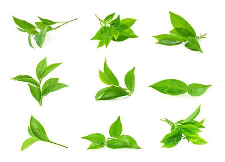 green tea leaf isolated on white background Reklamní fotografie