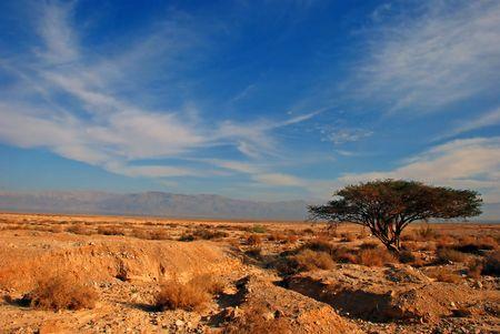 Desert and Tree standing under blue sky Stock Photo - 5087595