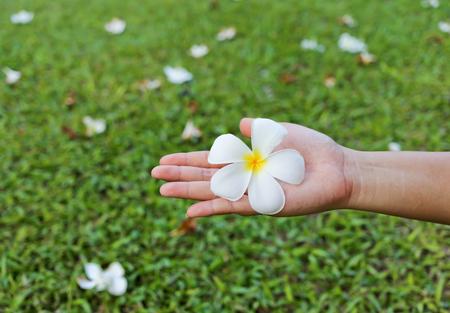 Hand flower on grass background photo