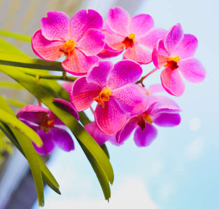 Orchid on White Isolated blue sky background photo