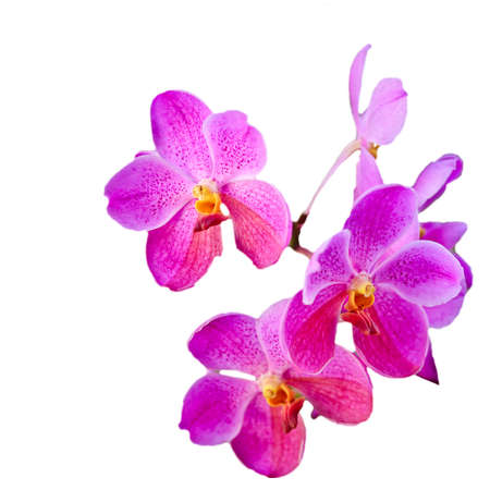 Orchid on White Isolated background photo