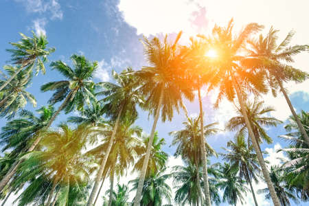 Palm trees with sun at the zenith and blue sky taken in El Nido  Palawan a Philippine attraction - Popular concept of tropical holidays -  Soft focus on top of trees due to sun halo and lens effect