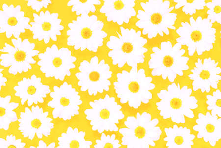 White daisies on yellow background flat lay top view - Spring time concept with  flowers  compositionon on pastel cardboard Stock Photo