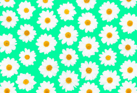 White daisies on green background flat lay top view - Floral texture overhead image -  Spring time concept with  flowers  compositionon on pastel cardboard
