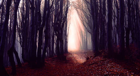 Misty forest path background - Spooky trees in a dark woods  trail with sun beams at autumn season - Foggy morning into the nature with bluish filter look and dark silhouette - Fall lights concept Stock Photo