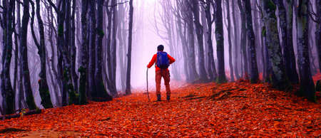 Man walking in the woods at autumn season - Portrait of trekking, nature, seasons, life paths