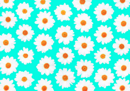 White daisies on cyan background flat lay top view - Bright pop flower pattern on light blue  - Overhead image - 스톡 콘텐츠