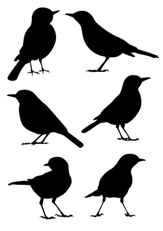 animal silhouette: Birds Silhouette - 6 different vector illustrations Illustration