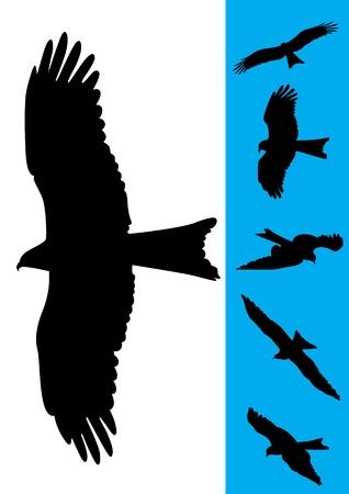 birds flying: Set of 6 Eagle Vector Illustrations Illustration