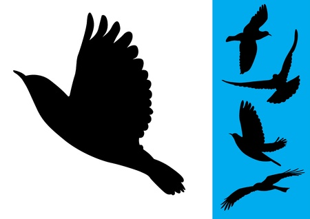 flying birds: Birds in flight - Vector Illustrations