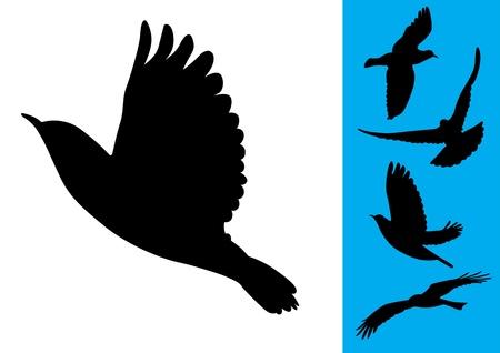 Birds in flight - Vector Illustrations