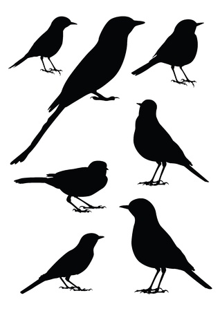 black bird: Birds Silhouette - 7 different vector illustrations