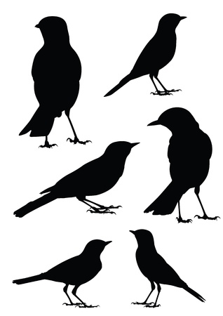 Birds Silhouette - 6 different vector illustrations Stock Vector - 13625764