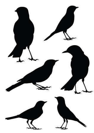 kształt: Ptaki sylwetka - 6 różnych ilustracji wektorowych