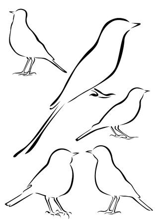 Birds Vector Illustrations in Brush Strokes Illustration