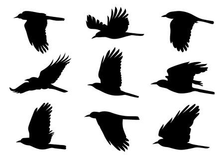 Pájaros en vuelo - 9 Diferentes ilustraciones vectoriales