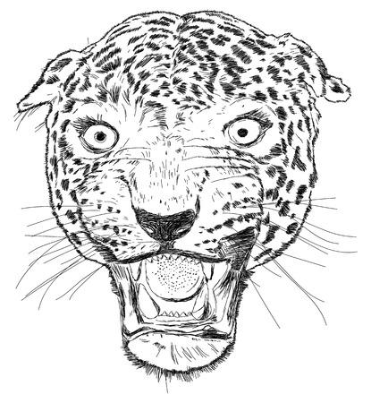 aggresive: Detailed Leopard Face Vector Illustration Illustration