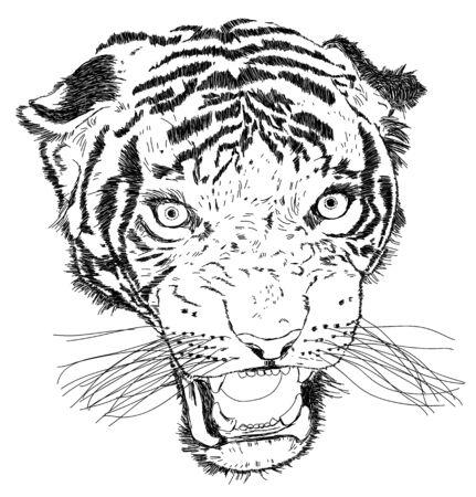 aggresive: Detailed Tiger Face Vector Illustration - Handmade