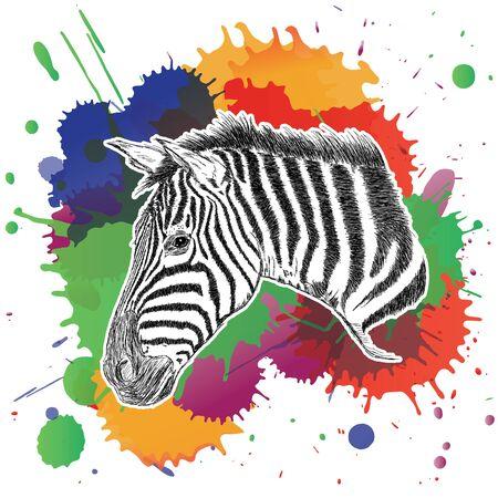 Cebra con colorida ilustración vectorial salpicaduras
