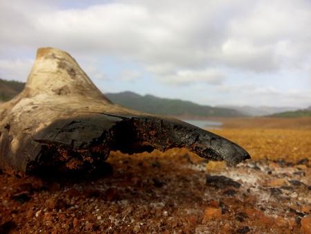 maharashtra: Remains of a wood after campfire.