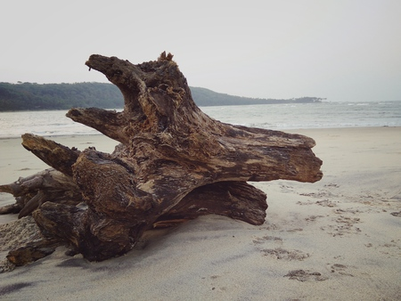 Remains of a tree trunk at a beach Stock Photo