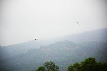 A bird flying in open sky with mountains in background
