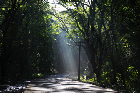 Rays of light falling on the road through the trees of Sanjay Gandhi National Park, India. Photograph captured on a fine morning.