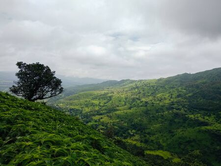 Mountains covered in lush and trees during monsoon in India