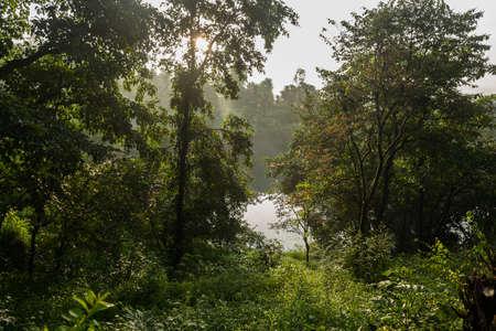Panormaic view of tall lush green trees shining in morning sunlight near Koyana lake in Tapola village of Satara district, Maharashtra, India