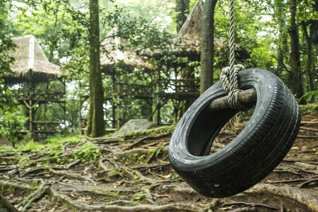 Tire swing hanging from a white oak tree Stock Photo