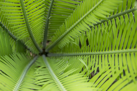 Center of fern tree background