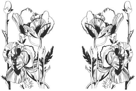oldened: Vector illustration with hand-drawn ink Poppy flowers