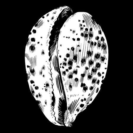 Sea shells vector monochrome illustration. texture background Illustration