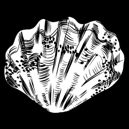 cockleshell: Sea shells vector monochrome illustration. texture background Illustration
