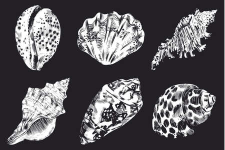 Sea shells vector monochrome illustration. texture background Illustration