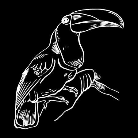 Toucan, Vector illustration of a Toucan, bird isolated on a white background. Illustration