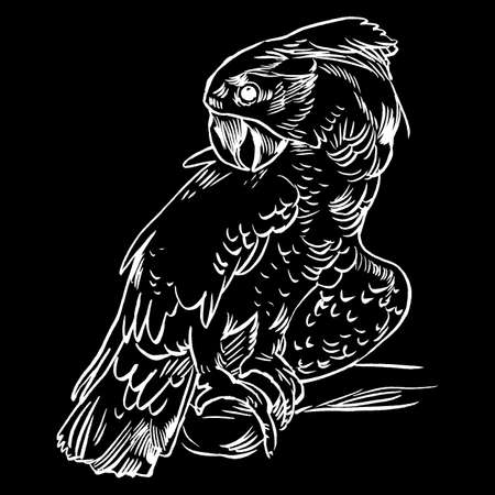 Parrot set isolated hand drawn vector llustration realistic sketch