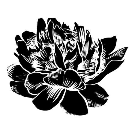 Hand-drawing peonies. Vector graphic flowers. Decorative background for cards, invitations. Template greeting card. Ink. Brush drawn - rough, artistic edges. Illustration