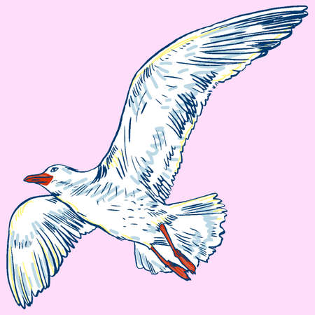 ornithologist: Gull flight bird and seabird . Sea , isolated on white background. Herring for your journal article or encyclopedia. Illustration
