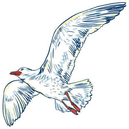 Gull flight bird and seabird.