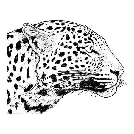 Leopard face tattoo ,Vector illustration, print fashion Illustration