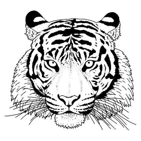 Tiger hand-dreawn Head Illustration Vector Illustration