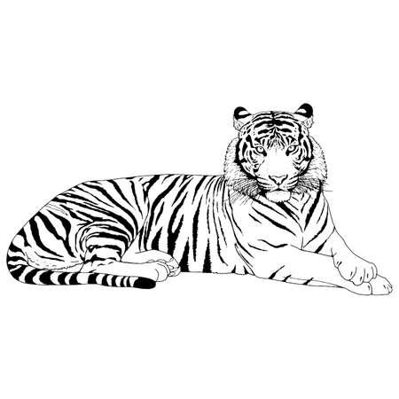 Tigre cabeza ilustración vectorial Ilustración de vector