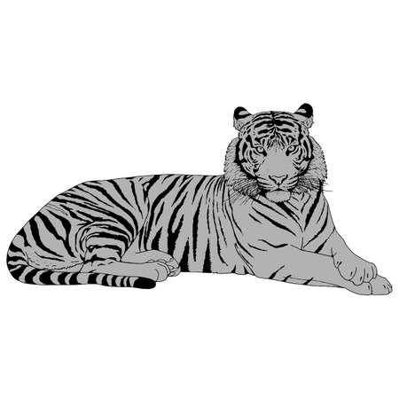bengal: Tiger Head Illustration Vector