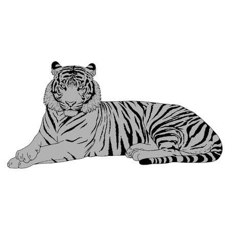 Tigre mano-desenrollada Ilustración de la cabeza