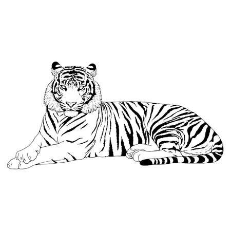Tiger Head Illustrazione Vettoriale Vettoriali