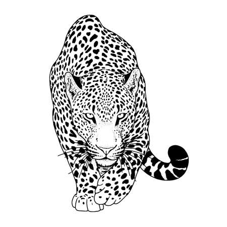 illustration of leopard, graphic vector animal Illustration