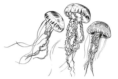 Medusas dibujadas a mano. Ilustración del vector. Colección de mar. Ilustración de vector