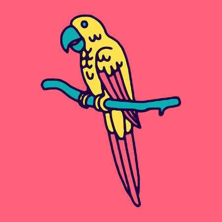 macaw: Parrot macaw, vector illustration